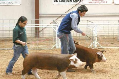 Wetumka local livestock show