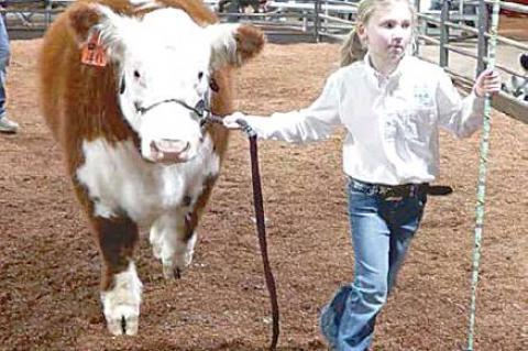 Moss local livestock show winners